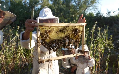 apiculture, ruche, miel, sophie berton, arles